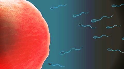 Alternative male contraceptives using chemicals from plants