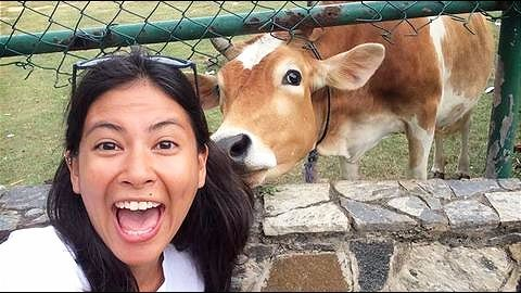 "Kolkata NGO's ""Selfie with a Cow"" contest"