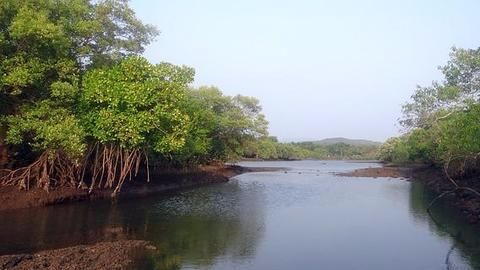 Government removes illegal hutments on mangrove land