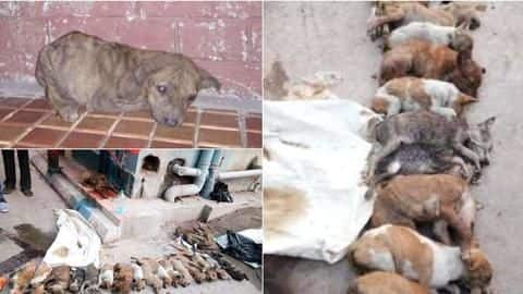 Kolkata: Two nursing students arrested for brutally killing 16 puppies