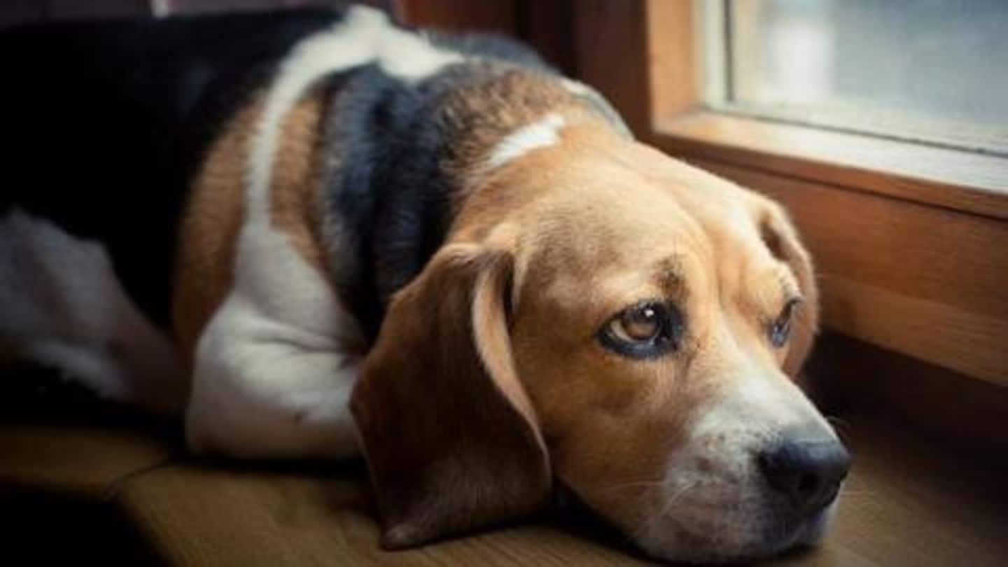 Maharashtra shocker: 90 dogs, with their legs tied, found dead