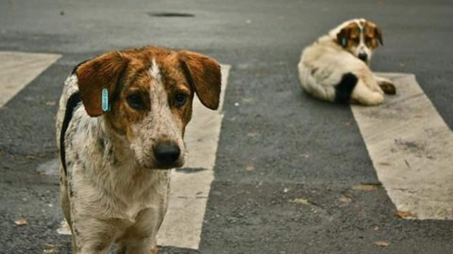 Mumbai: Woman fined Rs. 3.6 lakh for feeding stray dogs