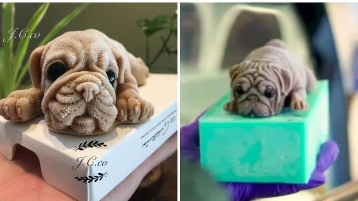 Creepy or Cute? Internet can't stop talking about puppy-shaped desserts