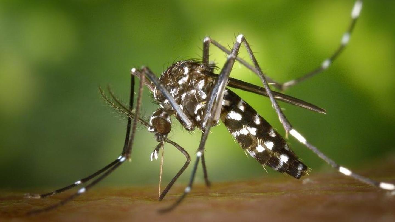 131 malaria cases reported in Delhi this season