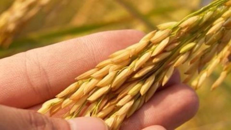 I-T to scrutinize high-value farm income