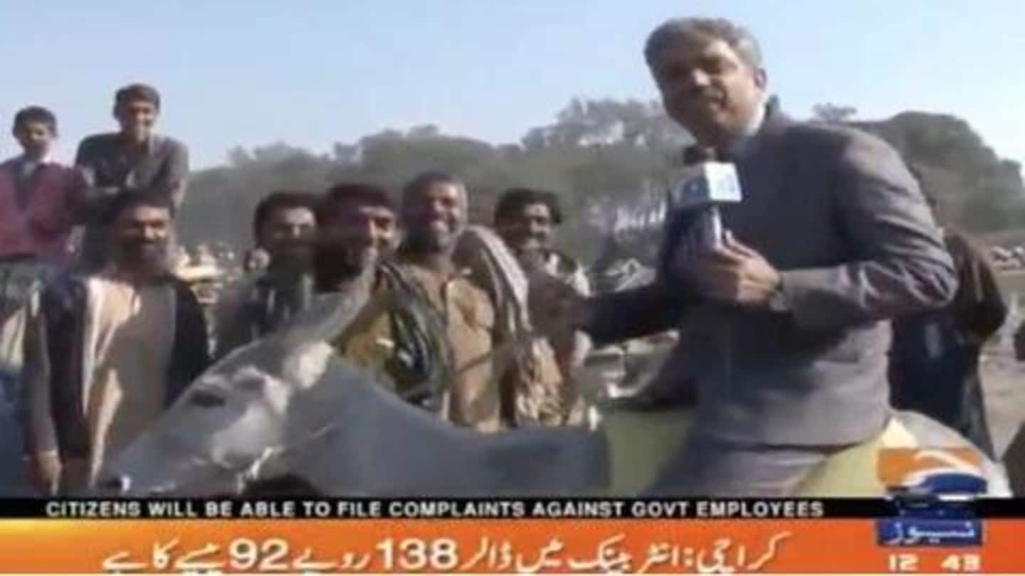 Pakistani reporter rides on donkey while reporting on 'donkey business'