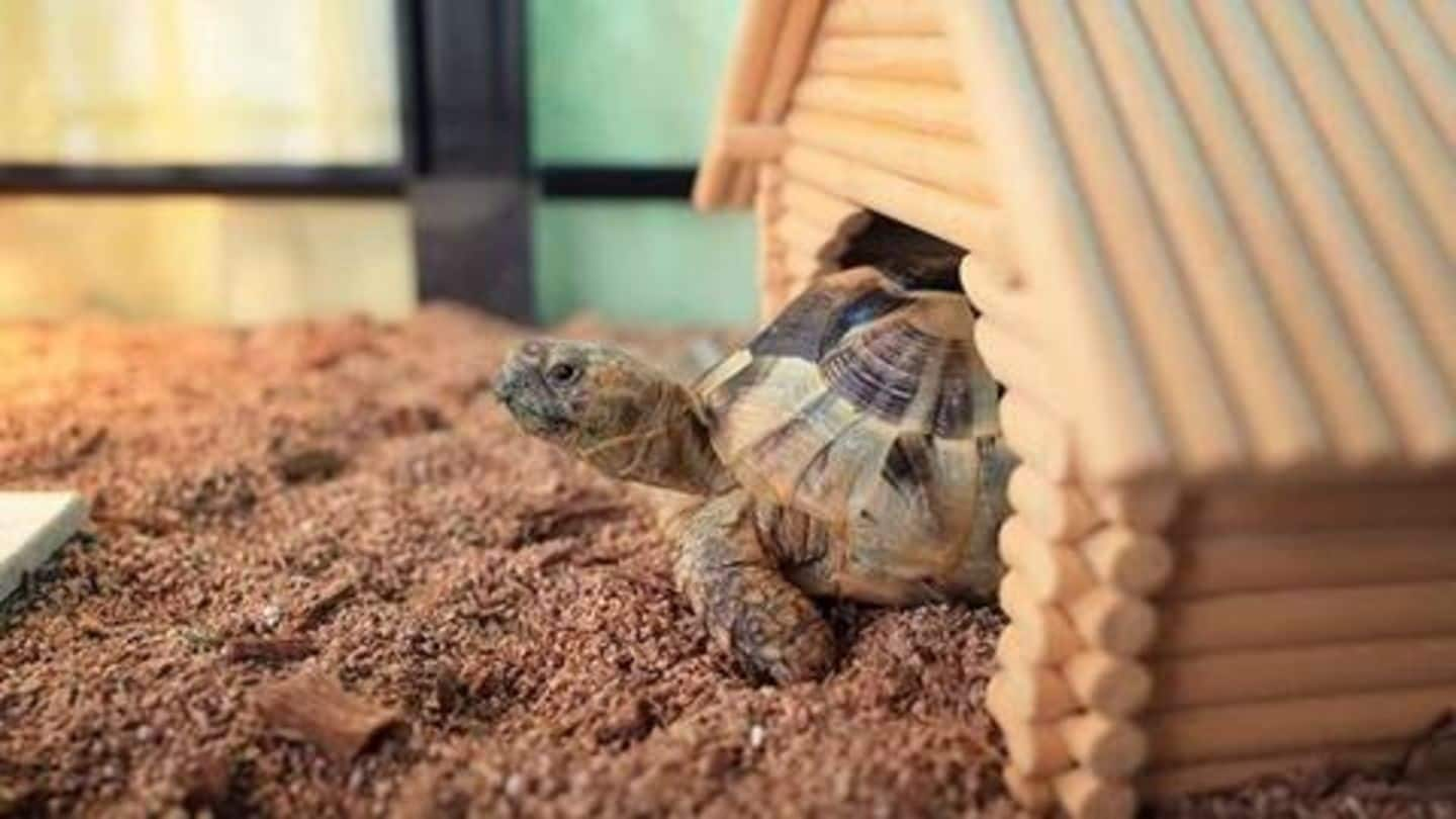 Turtles as pets? Here's everything you need to know