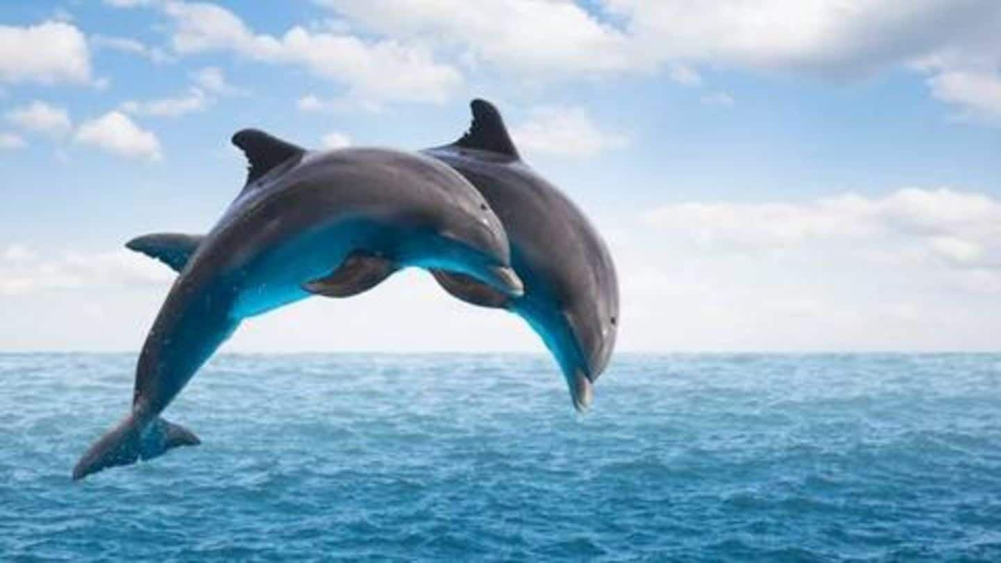 Six amazing facts about Dolphins you should know