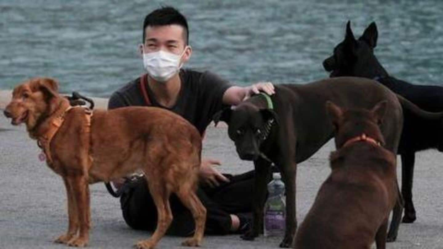 After coronavirus outbreak, China upgrades dogs from 'livestock' to 'pets'