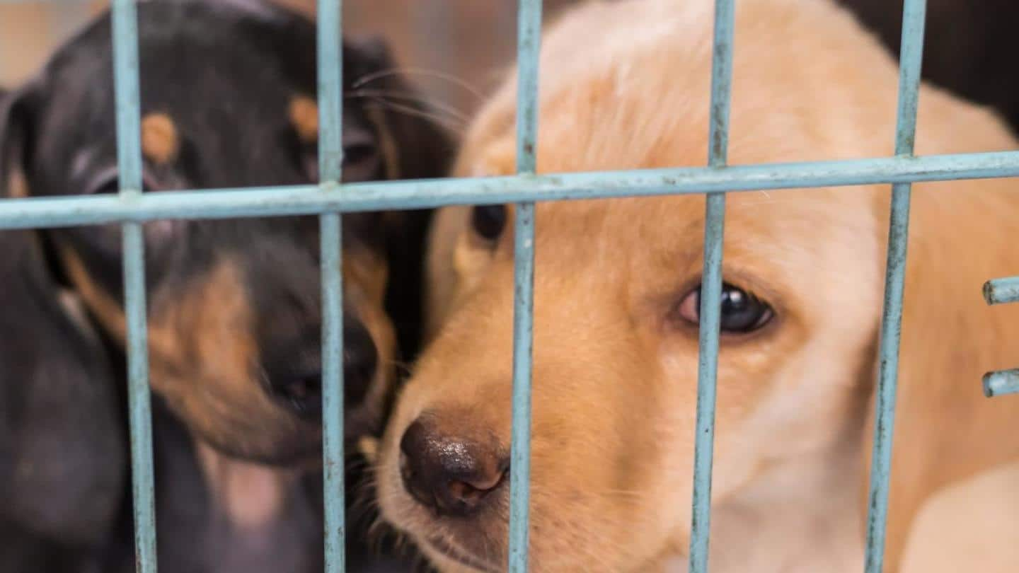 Quikr has ended animal sales and pet trading: PETA India