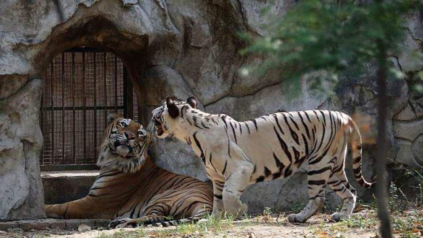 COVID-19 effect: Deaths at Delhi Zoo fall to three-year low