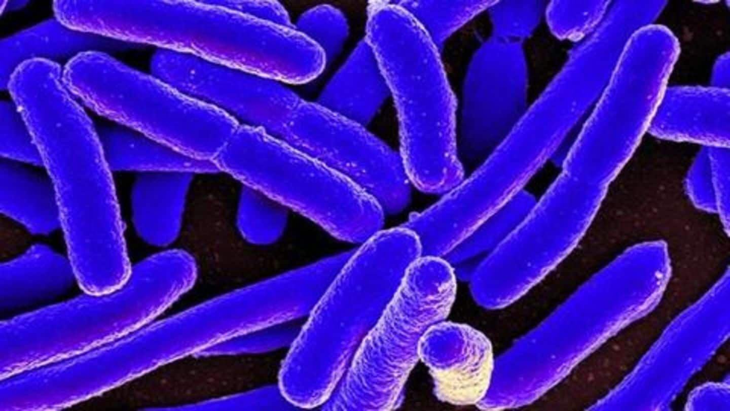Study: Superbugs kill more in India, twice of high-income countries